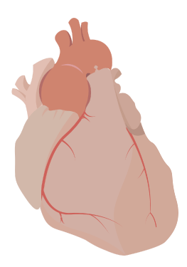 DrCH icon Aortic colour